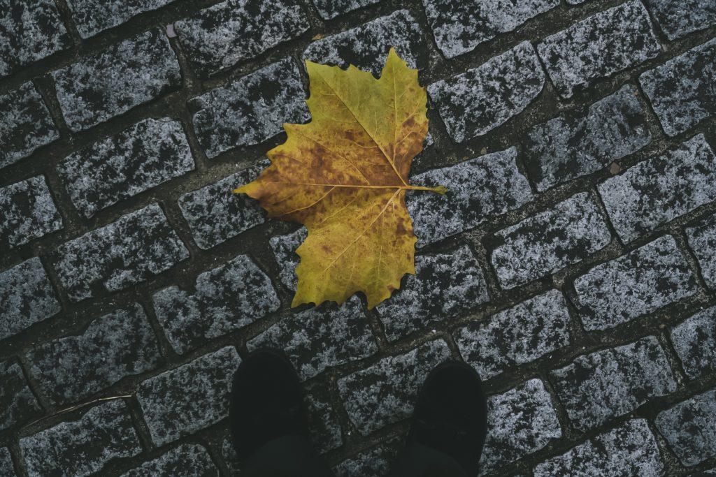大きなポプラの落ち葉
